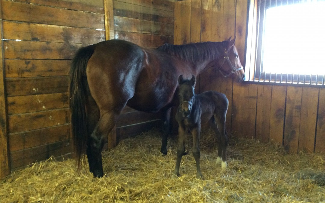 Take Charge Indy colt