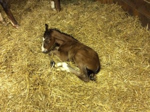 Bay colt by Warrior's Reward, out of Penrose....finally!
