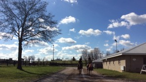 Miss Noble Rose returning to the barn at Keeneland.