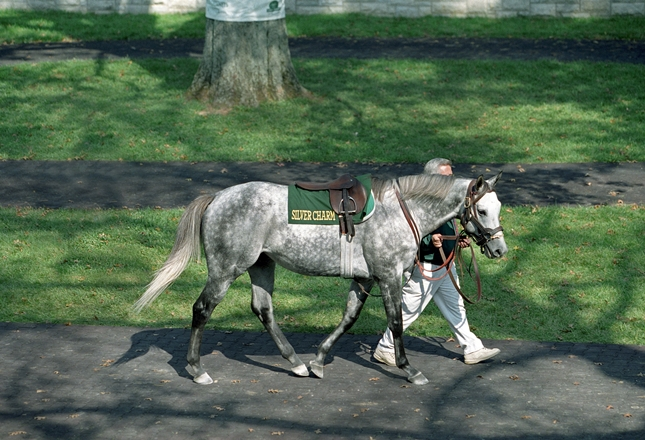 Silver Charm with Tom Wade at Keeneland farewell ceremony, October 1999 (Photo by Barbara Livingston).
