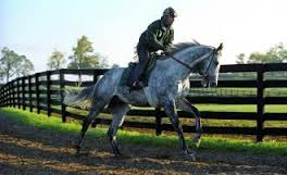 Silver Charm photographed under tack early in his career at Three Chimneys (Copyright Barbara Livingston.)