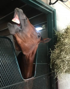 Rosecrest's Miss Noble Rose at Phil Simms' barn, requesting MORE mints!