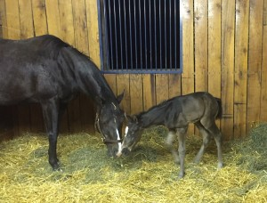 I'llgiveitawhirl and her colt by Gemologist.