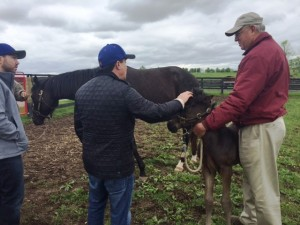 Owner meeting foal!