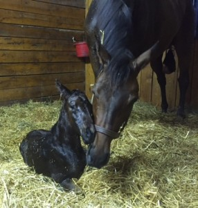 Rose dela Troienne and her colt by Overanalyze.