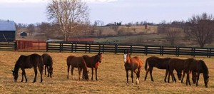 The now-yearling colts.  And, yes, that's WILLIE front and center!