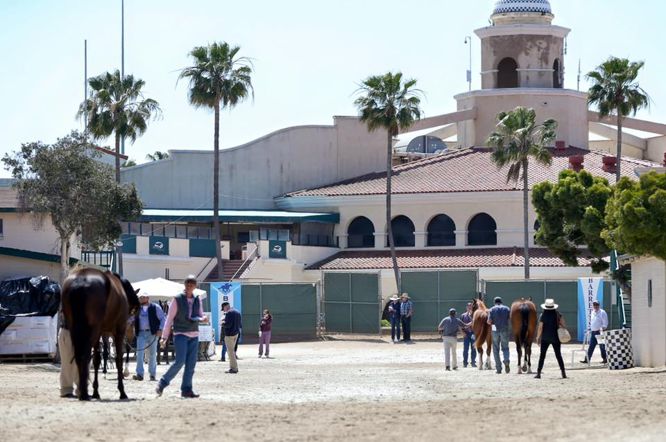 Five more Goldencents 2YOs cataloged at Barretts