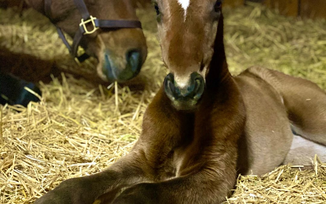 Our First Six Foals of 2021